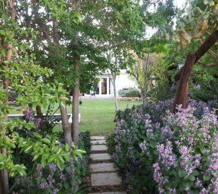 Garden Path - The Lemon Tree